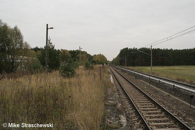 Bild: verwilderter Bahnsteig